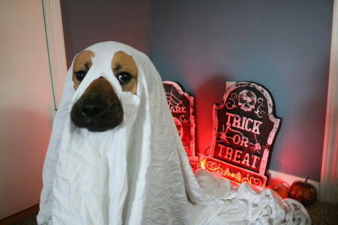 Halloween Pet Costumes You Can Make At Home