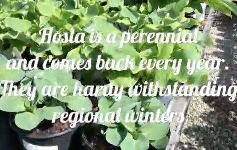 Tips for Gardening in Macon