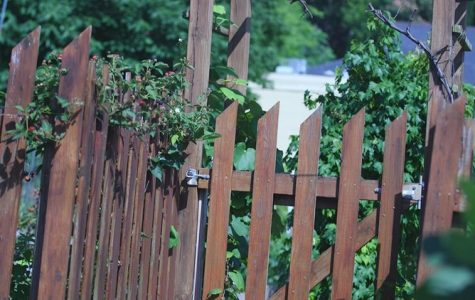 Macon Food Story, Chapter 5: Mulberry Community Garden