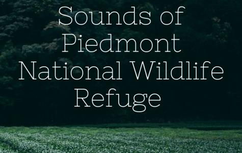 Sounds of Piedmont National Wildlife Refuge