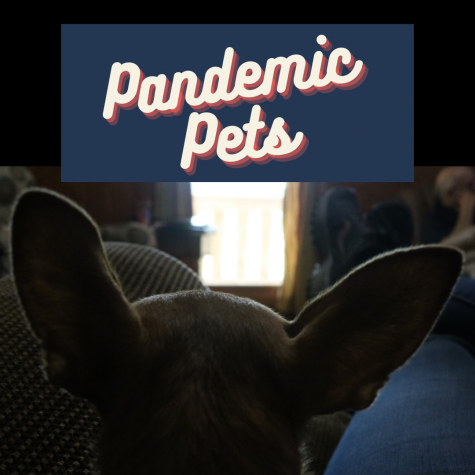 Pandemic Pets: How Have Rescues Been Impacted by COVID-19