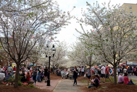 People crowded together under blooming cherry trees in Third Street Park during the 2019 Food Truck Frenzy.