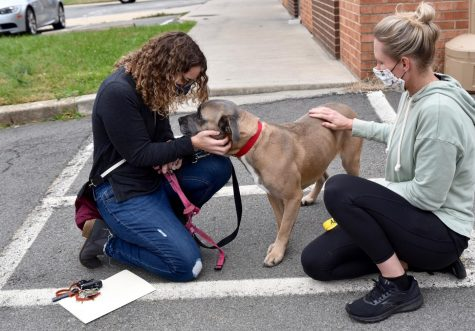 Sky, a boxer mix being fostered in Forsyth, flew to a new home in Virginia courtesy of Pilots N Paws volunteer pilot organization and Lost Dog and Cat Rescue Foundation.