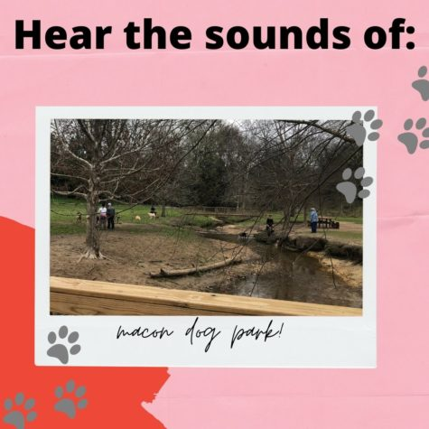 Sounds of the Macon Dog Park