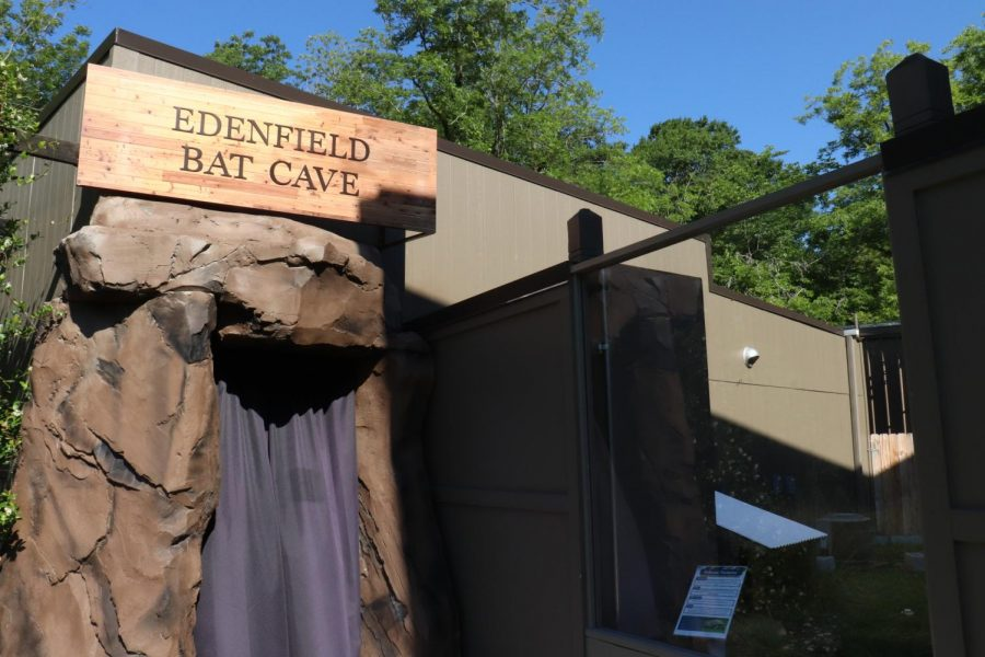 The black curtains mark the entrance to the Edenfield Bat Cave at the Museum of Arts and Science in Macon.